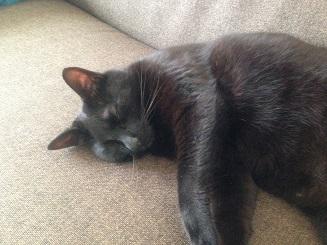 疲れ果てて半目で眠る黒猫