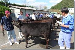 家畜の品評会